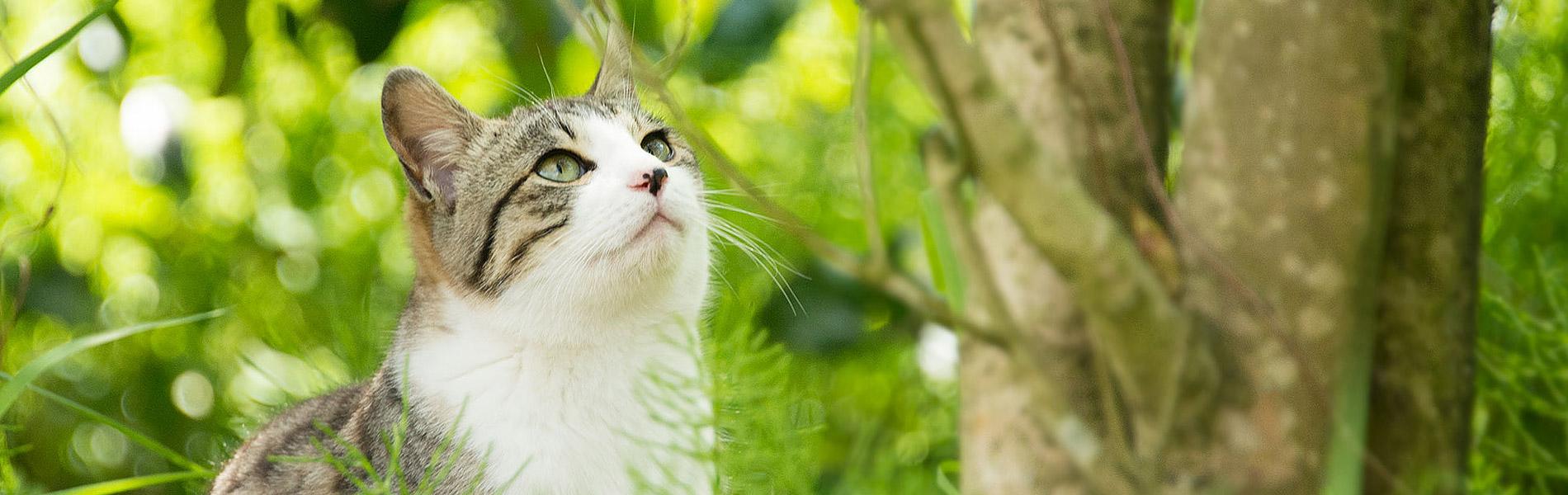 猫の健康を第一に考え、使うだけで地球温暖化防止に貢献する「命の猫砂」